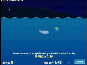 Dolphin Olympics (3)